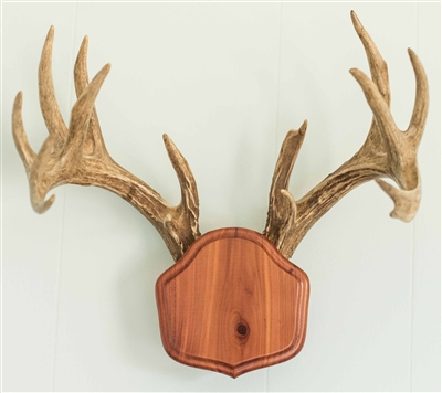 "Cedar ""The Deer Stand"" Antler Mounting Kit"