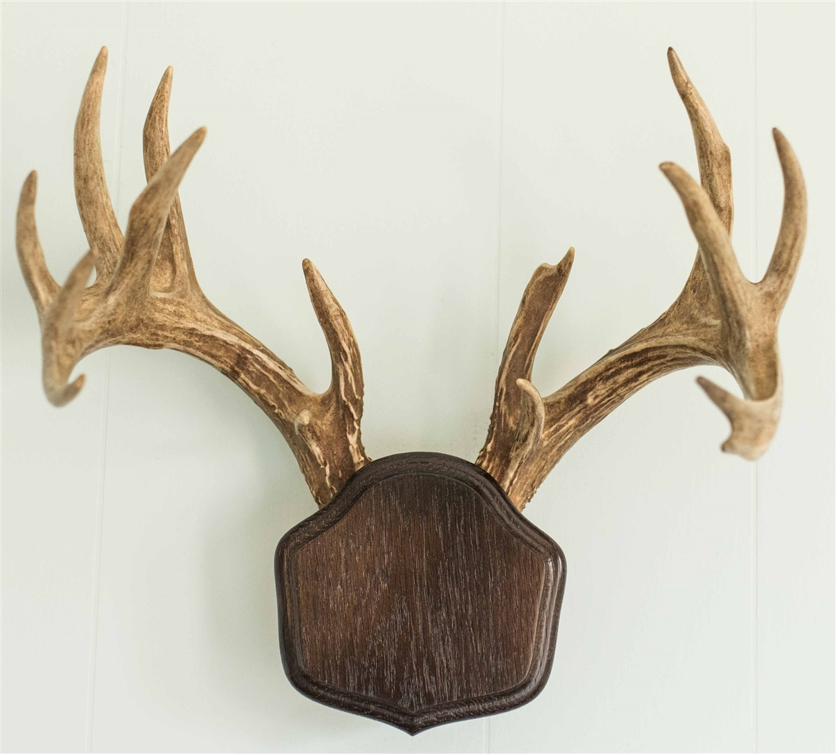 Deer antler mounting kit instructions - Deer Antler Mounting Kit Instructions 13