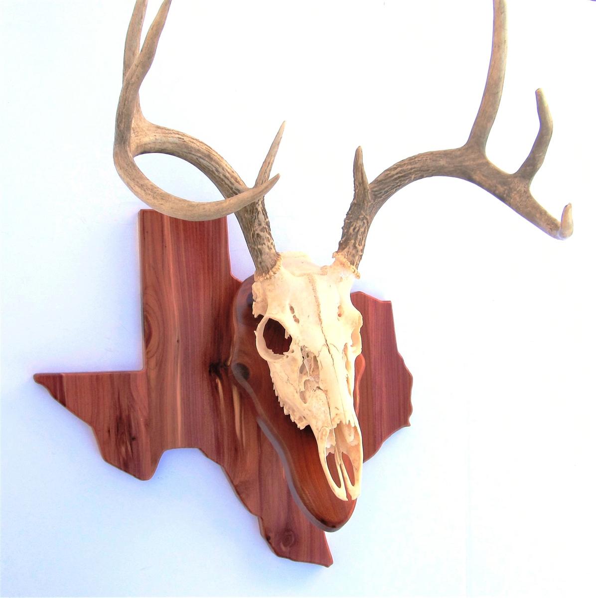 Deer Head Mount >> State Deer European Skull Mount Wall Pedestal
