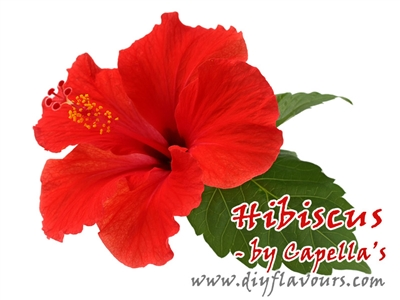 Hibiscus by Capella's