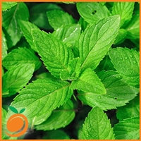 Spearmint by Real Flavors