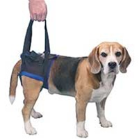 Rear support harness for arthritis in dogs