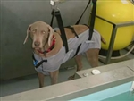 Hydrotherapy Sling