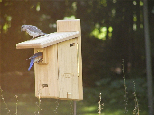 aqua bluebird feeders feeder post quick bird view couronne fence