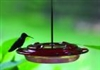 8 oz Hummerfest Hummingbird Feeder by Birds Choice