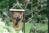 Single Cake Tail Prop Suet Feeder