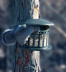 "Squirrel Dinerâ""¢"