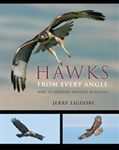 Hawks from Every Angle: How to Identify Raptors in Flight