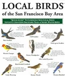 Local Birds of the San Francisco Bay Area (laminated fold-out guide)