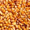 Shelled Corn 50lb