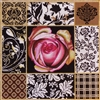1088 Copper Rose Collage