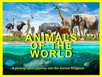 Animals of the World Picture Book for babies and toddlers