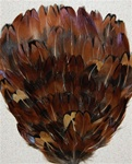 English Ringneck Pheasant Feather Pad