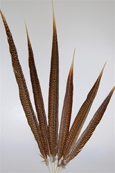 "Golden Pheasant Tails - 20"" & Up"