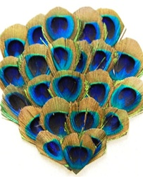 Peacock Feather Pad