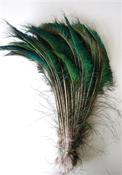 Peacock Feather Swords 10-14""