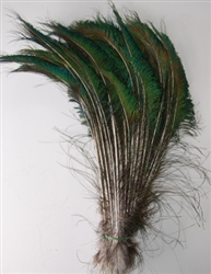 Peacock Feather Swords 15-20""