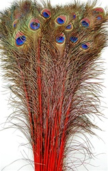 Peacock Feather Tails