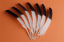 Turkey Quills Two-Tone (Per Piece)
