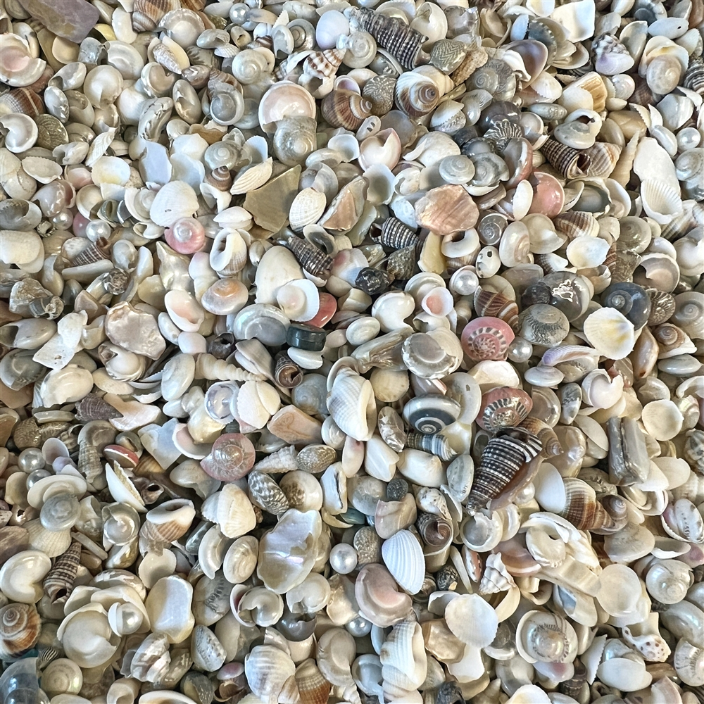 BD02262, tiny shells for jewelry making, seashells, shells, little shells, small shells, drilled shells, Boho, beach, beach jewelry, Mermaid Sand, B'sue Boutiques, natural colored shells, undyed shells, real sea shells, sea, Boho jewelry