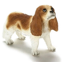 King Charles Spaniel standing