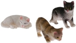 Small Cats-