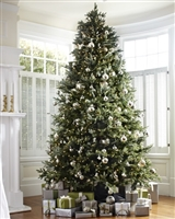 Fraser Fir Deluxe Tree 12' - Clear