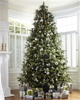 Fraser Fir Deluxe Tree 14' - Clear
