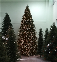 14' Commercial Size Tower Tree
