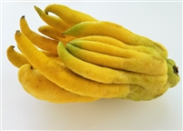 Buddha's Hand Citrus - Citron - Fingered citron