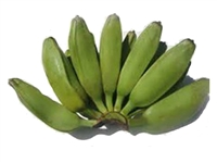 The Burro banana is occasionally sold under the name chunky banana as it is stubbier and more of a square shape than the common banana. Its peel is a rich, vivid, dark green that turns deep yellow with characteristic black spots when ripe.