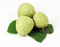Exotic Fruit Market grows Cherimoyas in the State of California since 20013. The cherimoya is also known as chirimoya and chirimuya. Cherimoya is native to Ecuador, Colombia, Peru and Bolivia. Today, cherimoya is grown in California.