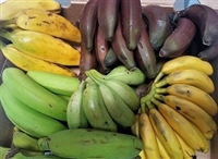 "Exotic Fruit Market offers five different exotic bananas as a sampler, usually not available at local grocery store. Our banana sampler includes a rare selection of the finest ""hands"" of bananas."
