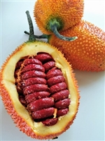 Exotic Fruit Market grows Gac Fruit in California, USA. Gac fruit - Momordica cochinchinensis, a strange and beautiful red fruit originating from Vietnam.