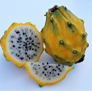 Exotic Fruit Market offers Yellow Dragon fruits grown in South America and Israel. Sweet, juicy yellow dragon fruit is obtained from the cactus family plants of Central American origin, in the genus: Hylocereus.
