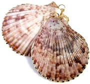 1pc pink shell pendant gold plated