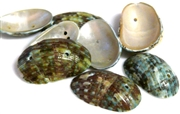 6pc green 2 hole shell ovals