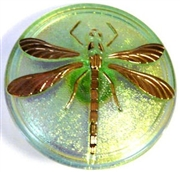 1pc czech glass button peridot ab dragonfly 42mm