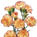 Wholesale Bulk Discount Mini Spray Carnations BiColor Yellow-Orange
