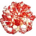Wholesale Peppermint Carnations