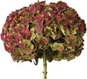 Antique Hydrangea Flower