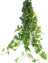 Wholesale Bulk Discount Wholesale Ivy - Green Greenery