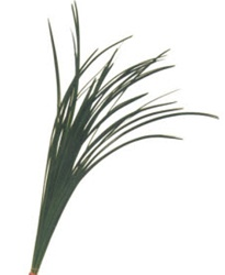Wholesale Bulk Discount Wholesale Lily Grass