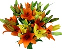 Wholesale Bulk Discount Cut Asiatic Lilies Asst.