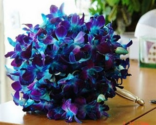The Blue Dyed Dendrobium Orchid