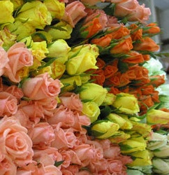 Wholesale Bulk Discount Cut Roses Colombia Ecuador Assorted Color