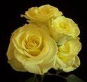 Online Wholesale Bulk Discount Cut Lemon Yellow Spray Roses