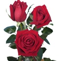 Classy Red Rose