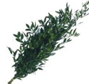 Wholesale Bulk Discount Wholesale Italian Ruscus Greenery