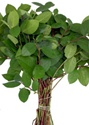 Wholesale Bulk Discount Wholesale Salal Lemon Leaf Greenery